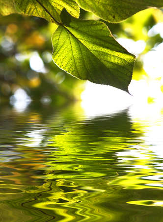 Beautiful scenics - green leaves reflection in water (shallow depth of field) photo