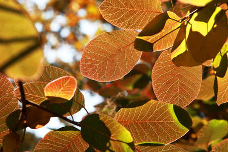 seasonality: Colorful and bright autumn leaves background, shallow depth of field