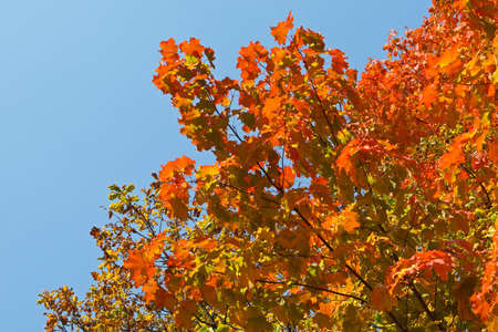 seasonality: Colorful and bright autumn leaves background