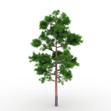 stately: Isolated summer tree with foliage Stock Photo