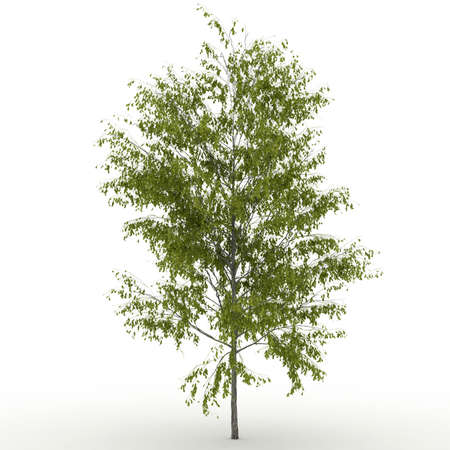 Isolated summer tree with  foliage Stock Photo - 17681862