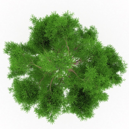 Isolated summer tree top Stock Photo - 17681866