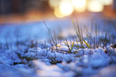 macrophoto: grass through snow winter macrophoto sun shines evening light bokeh beautiful