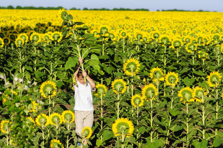 Boy in a white t-shirt sunflowers field photo