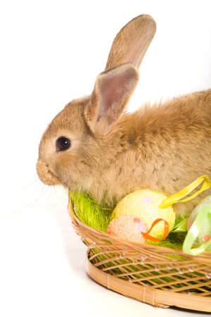 Easter bunny with basket and colored eggs photo