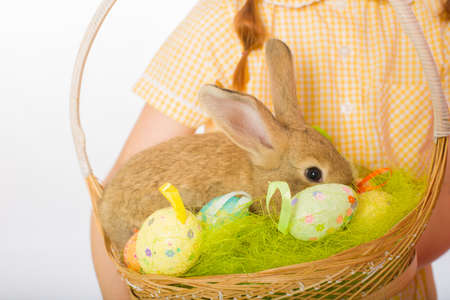rabbit in a basket easter eggs photo