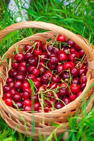 sour grass: Basket of cherries on a green grass