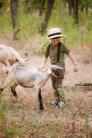 A little boy in a straw hat feeds goats with green grass in the village near the pen. Rural life