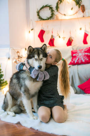 Cute girl at home with a dog Malamut Stock Photo