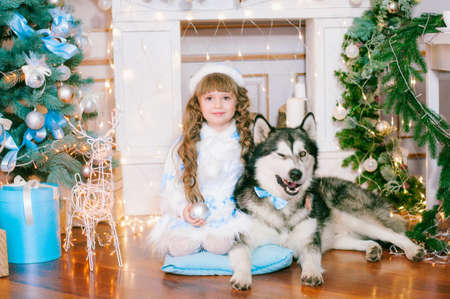 te girl with long hair in a white ball gown near a Christmas tree with a dog of breed Malamute breed with gifts and silver confetti. Christmas mood