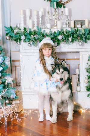 Cute girl with long hair in a white ball gown near a Christmas tree with a dog of breed Malamute breed with gifts and silver confetti. Christmas mood
