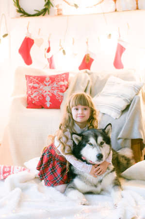 Cute girl with long hair with a dog breed Malamute in the room with Christmas decorations and gifts. Christmas mood