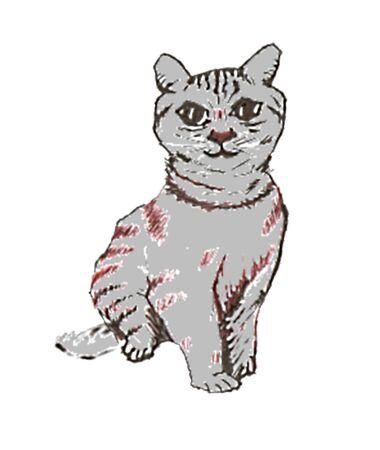 grey cat: A grey cat