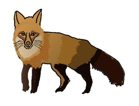 A brown fox Illustration