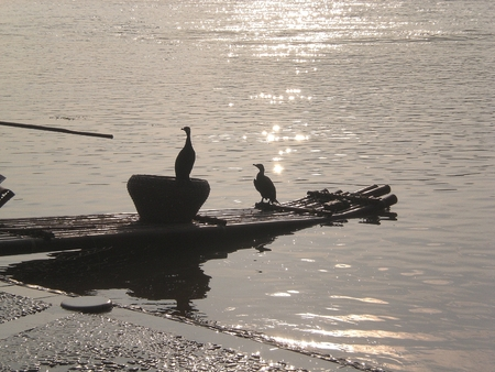 Water geese in the sunset in Guilin