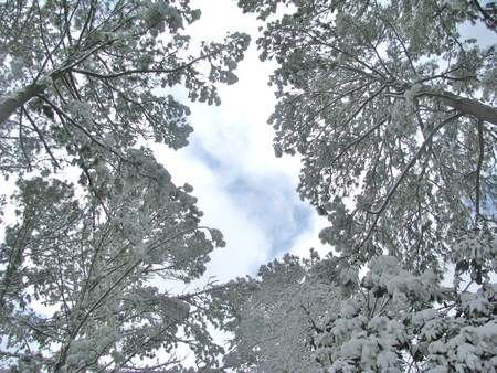 Trees and sky covered with heavy snow