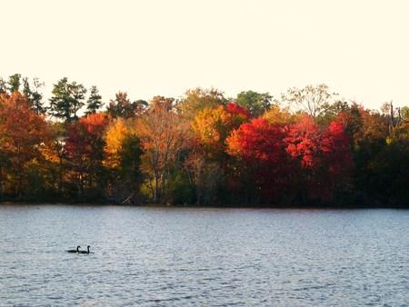アメリカ南東部からの美しい秋の色  イラスト・ベクター素材