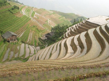 terraced: Terraced fields on the mountains of the city of Longji in Guangxi
