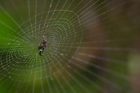 arachnophobia: The net of very small spider in the jungle.