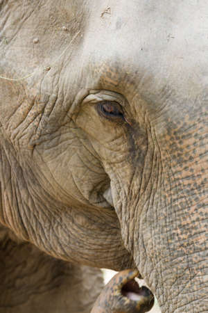 zooming: The picture of zooming into the eye of elephant. Stock Photo