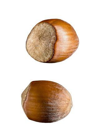 hazel nut: Hazel nut set macro photo Stock Photo