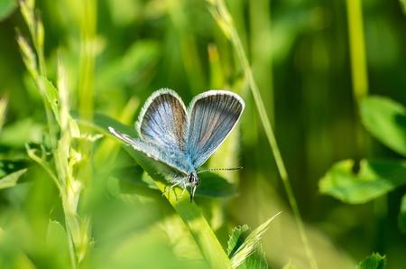 beautyful butterfly on the grass macro