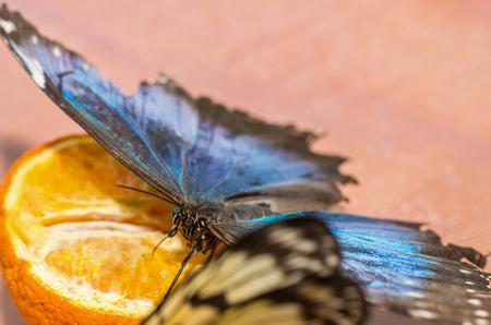 Colorfull butterfly sitting on orange Banco de Imagens