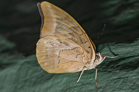 Full size bride butterfly sitting