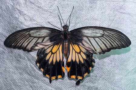Full size colorfull butterfly