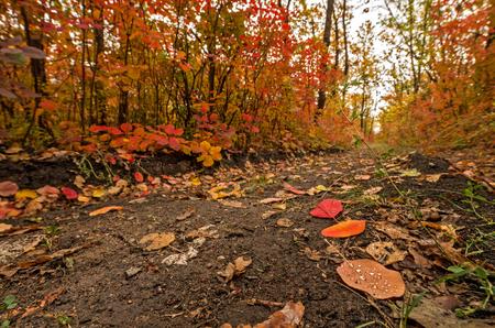 Path at the autumn forest Banco de Imagens