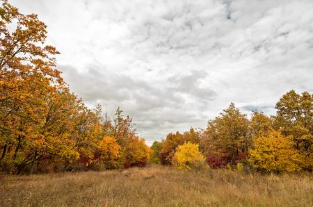 Autumn forest landscape photo