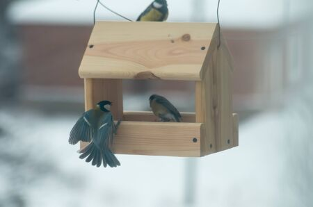 Feeding bird in winter
