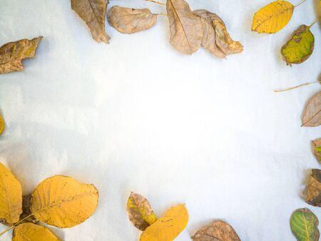 Minimal wulnut leafes site framing