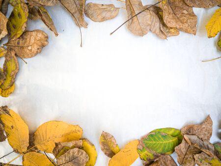 Wulnut leafes web site framing