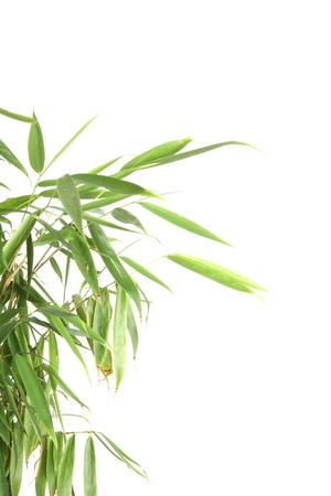 bamboo leaves on white background photo