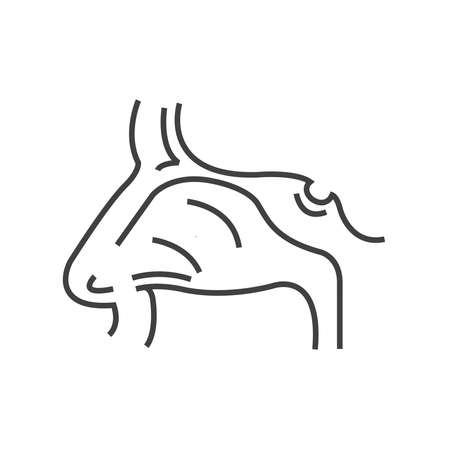Human Nose, Medical Doctors Otolaryngology icon, line icon Style Illustration