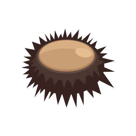 urchin: Illustration of a close up sea urchin brown