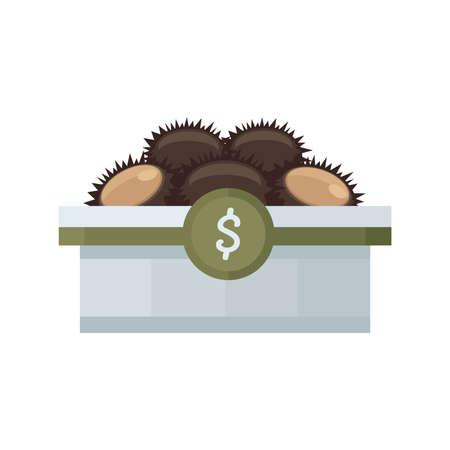 urchin: Brown sea urchin on tray