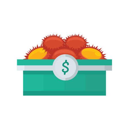 urchin: yellow sea urchin on tray