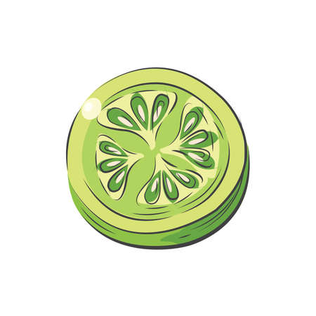 Sliced green Tomato vector drawing watercolor