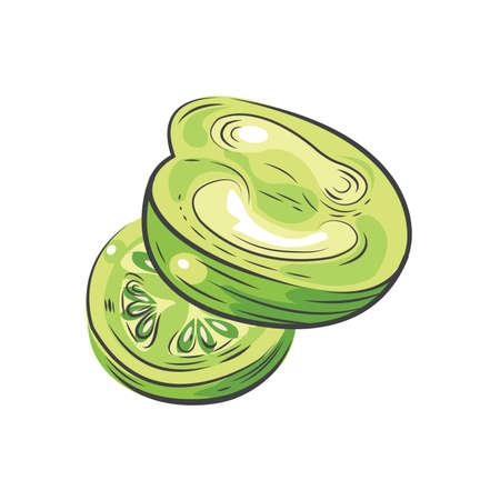 green Tomato vector drawing design watercolor Ilustrace