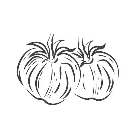 Zwei Tomaten Zeichnung Symbol Standard-Bild - 75432467
