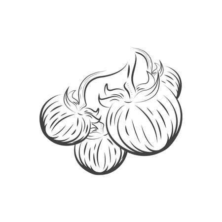 Vier Tomaten Zeichnung Symbol Standard-Bild - 75706511