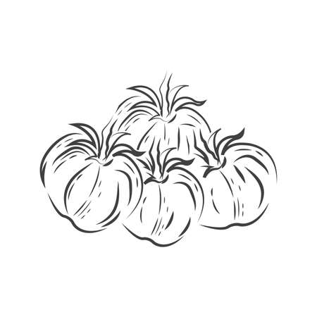 vector Tomato drawing icon