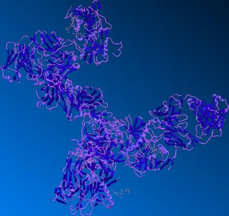 membrane cellulaire: Ebola glycoprot�ine est pr�sente � la surface du virus. Il se lie � des r�cepteurs sur la surface cellulaire et ensuite pouvoirs fusion du virus avec la membrane cellulaire. Banque d'images