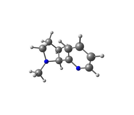 potent: Nicotine is a potent parasympathomimetic alkaloid found in the nightshade family of plants (Solanaceae) and a stimulant drug Stock Photo