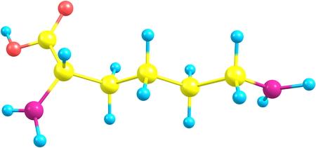 �cido: Lisina (Lys) es un amino�cido con el HO2CCH f�rmula qu�mica (NH2) (CH2) 4NH2. Es un amino�cido esencial para los seres humanos