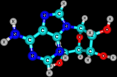 adenine: Adenosine is a purine nucleoside composed of a molecule of adenine attached to a ribose sugar molecule moiety