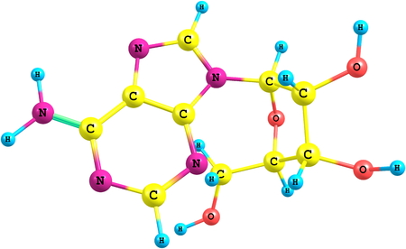 nucleotide: Adenosine is a purine nucleoside composed of a molecule of adenine attached to a ribose sugar molecule moiety