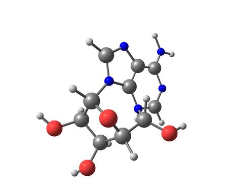 purine: Adenosine is a purine nucleoside composed of a molecule of adenine attached to a ribose sugar molecule moiety